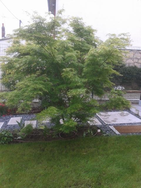 Fou de jardin entretien petits grands jardin particuliers for Entretien jardin particulier